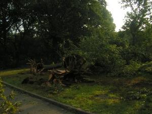 tornado (4)