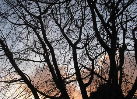 garden tree, Jan. 12, 2012