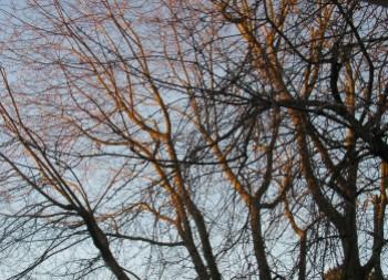 gaarden tree, Jan. 16, 2012