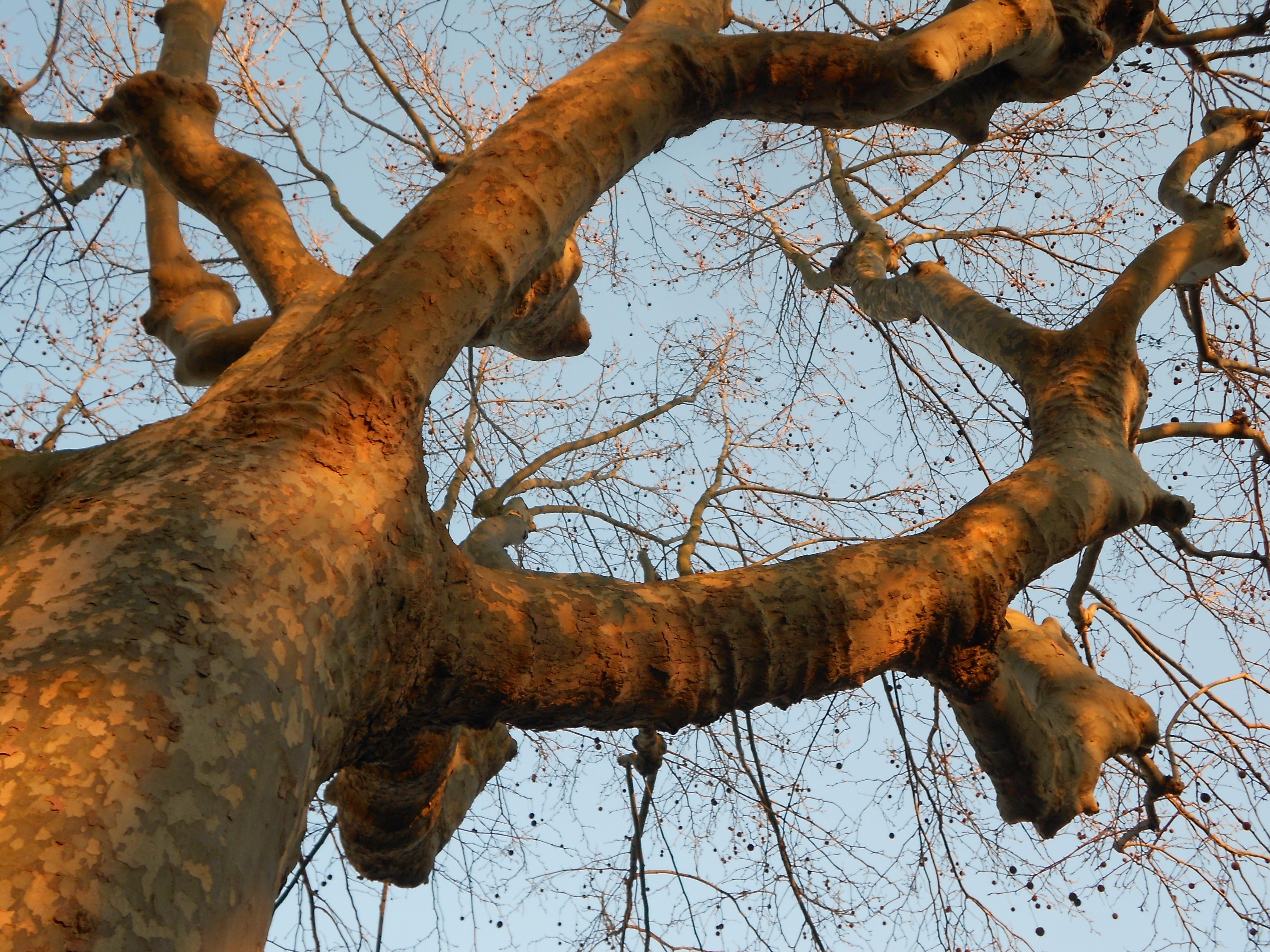tree next to my bike parking garage at INSEE, Malakoff, Feb. 02, 2012