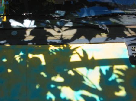 leaves from a pergola reflecting on a truck, Crès, near Montpellier, June 14, 2012