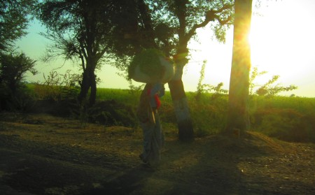 sunset on the road from Tonk to Ranthambore, Rajasthan, Dec. 28, 2012