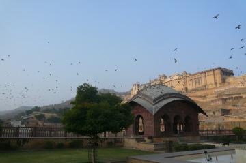 Amber Fort from Maota Lake, Jaipur, Rajasthan, Dec. 30, 2012 (c.) Brigitte Plessis