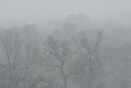 unusual snowfall on Bois de Boulogne, March 12, 2013