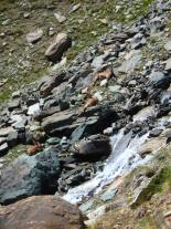steinbocks near Colle della Rossa, Aosta, Jul 16, 2016